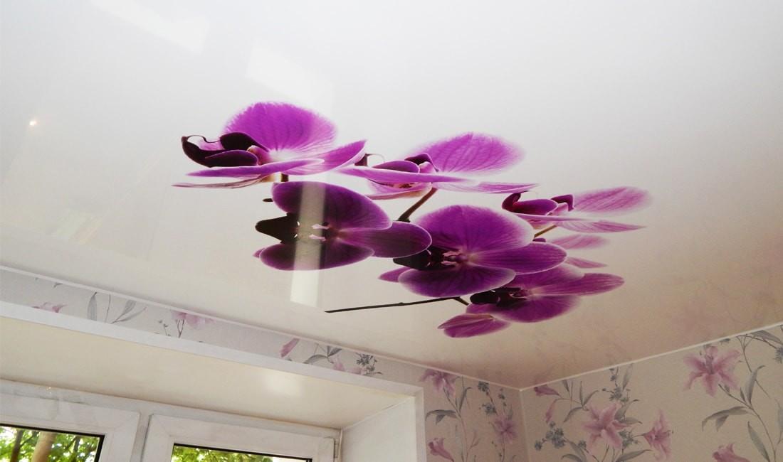 варианты картинок орхидеи для натяжных потолков экструдера имеет право
